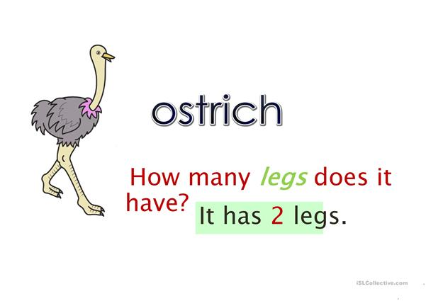 How many legs does it have?