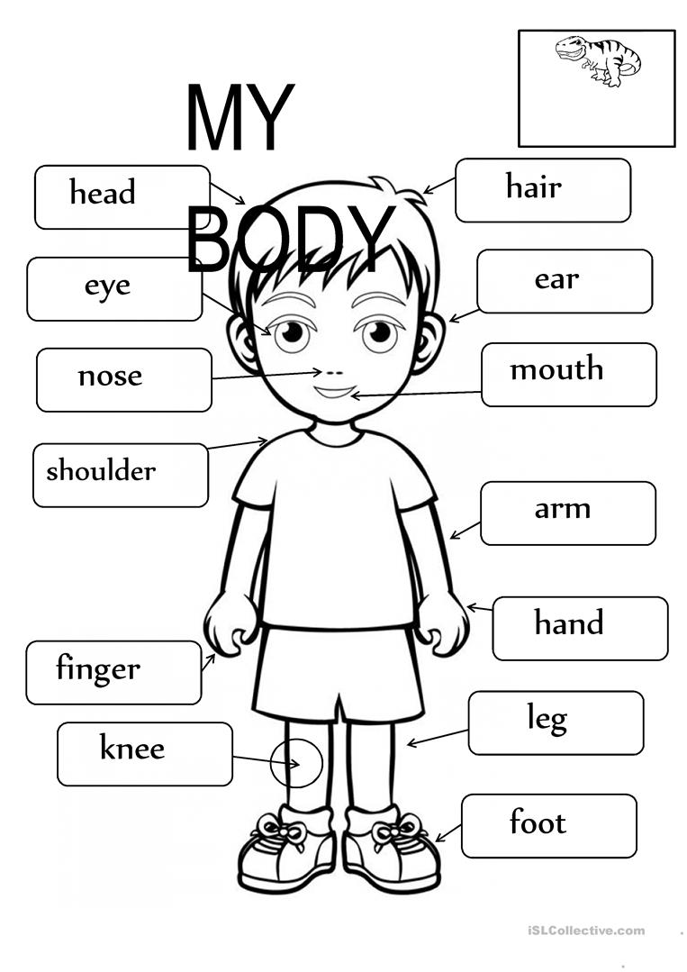 Body Parts Fill in the blanks worksheet - Free ESL ...