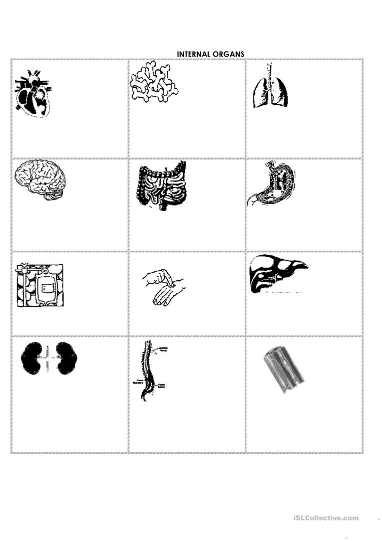 Number Names Worksheets write the number names worksheets : 10 FREE ESL internal organs worksheets