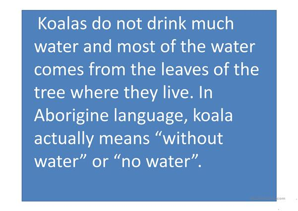 Interesting facts about koalas.