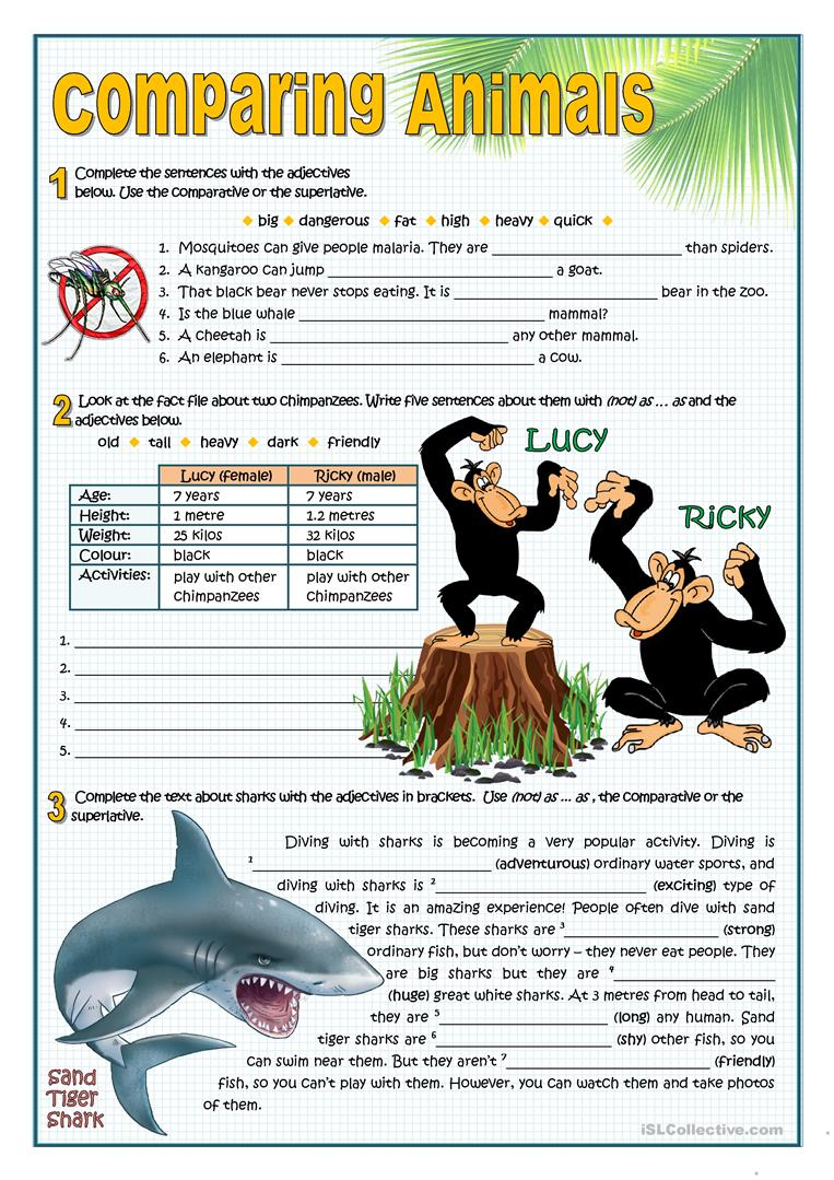 COMPARING ANIMALS - English ESL Worksheets