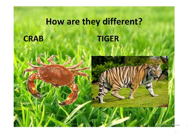 Comparisons with animals