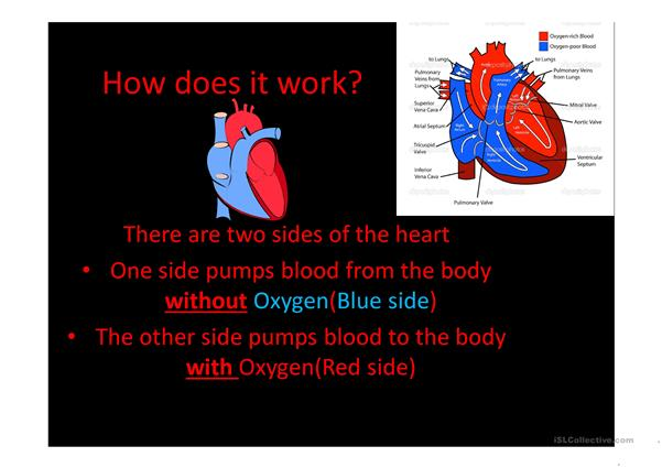 Introduction to the heart and circulatory system