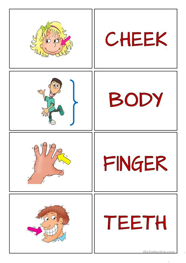 BODY - 40 FLASHCARDS