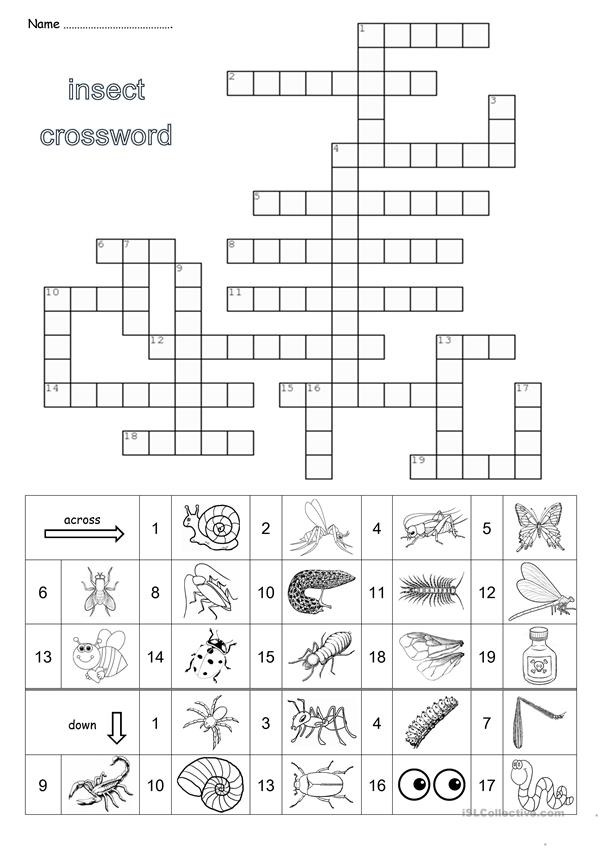Insect crossword