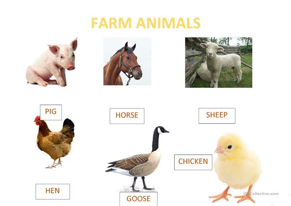 Farm animal picture dictionary