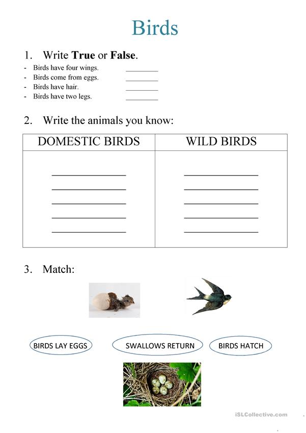 What do you know about BIRDS - basic vocabulary