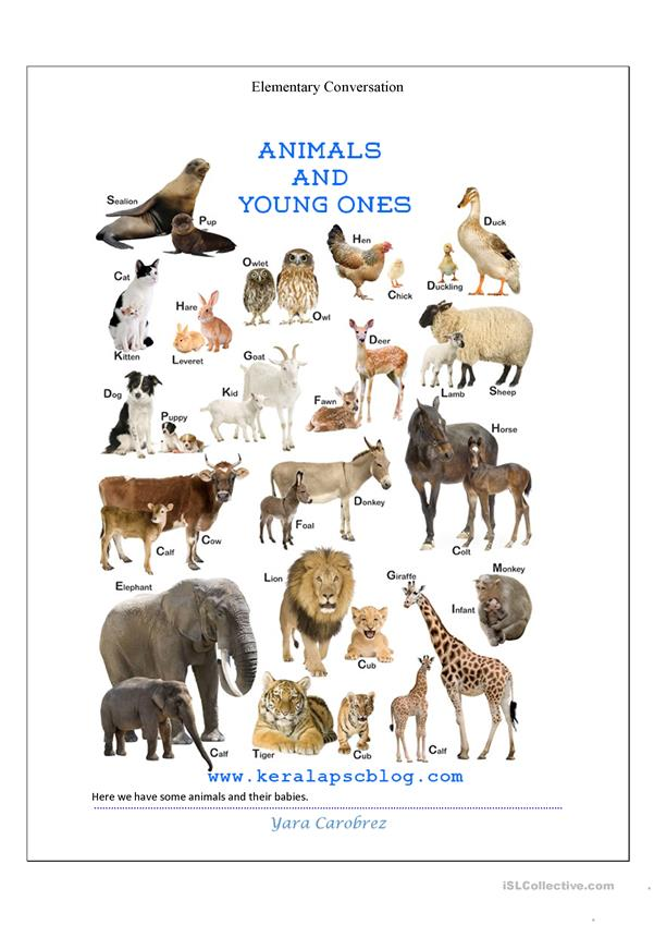 Verb to be, simple present, animals and habitats, comparative and superlative