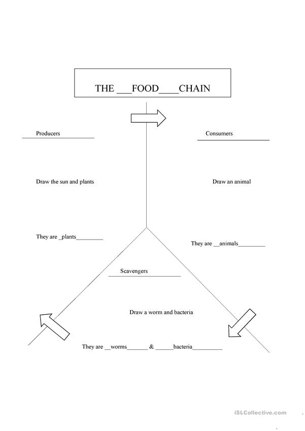 Food Chain Fill in the Blank (Producers, Consumers, Scavengers)