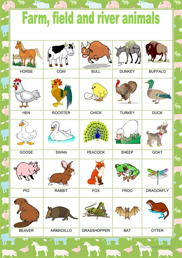 Picture dictionary - Animals - Farm, Field and River