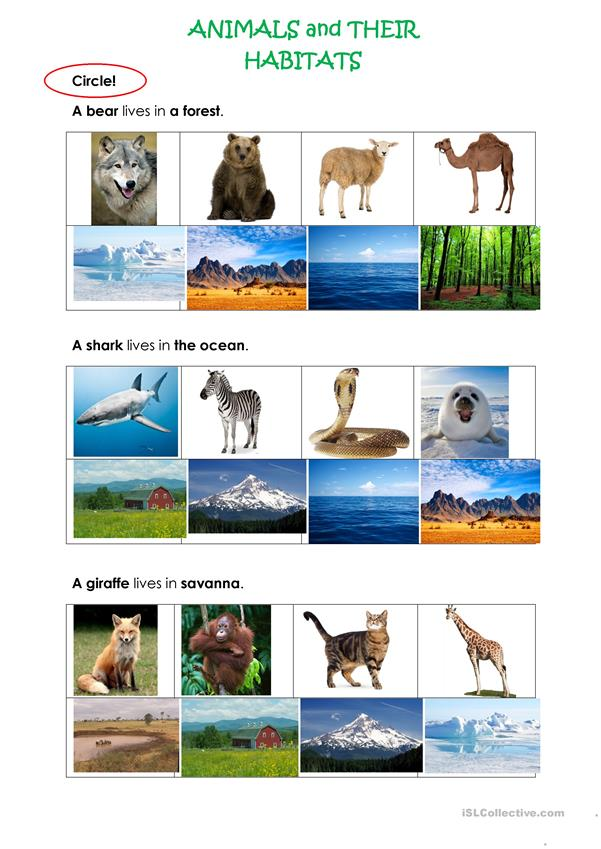 ANIMALS AND THEIR HABITATS