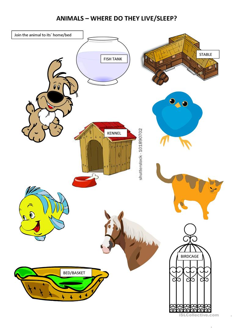 Primary 1 Animals and their homes/beds - English ESL Worksheets