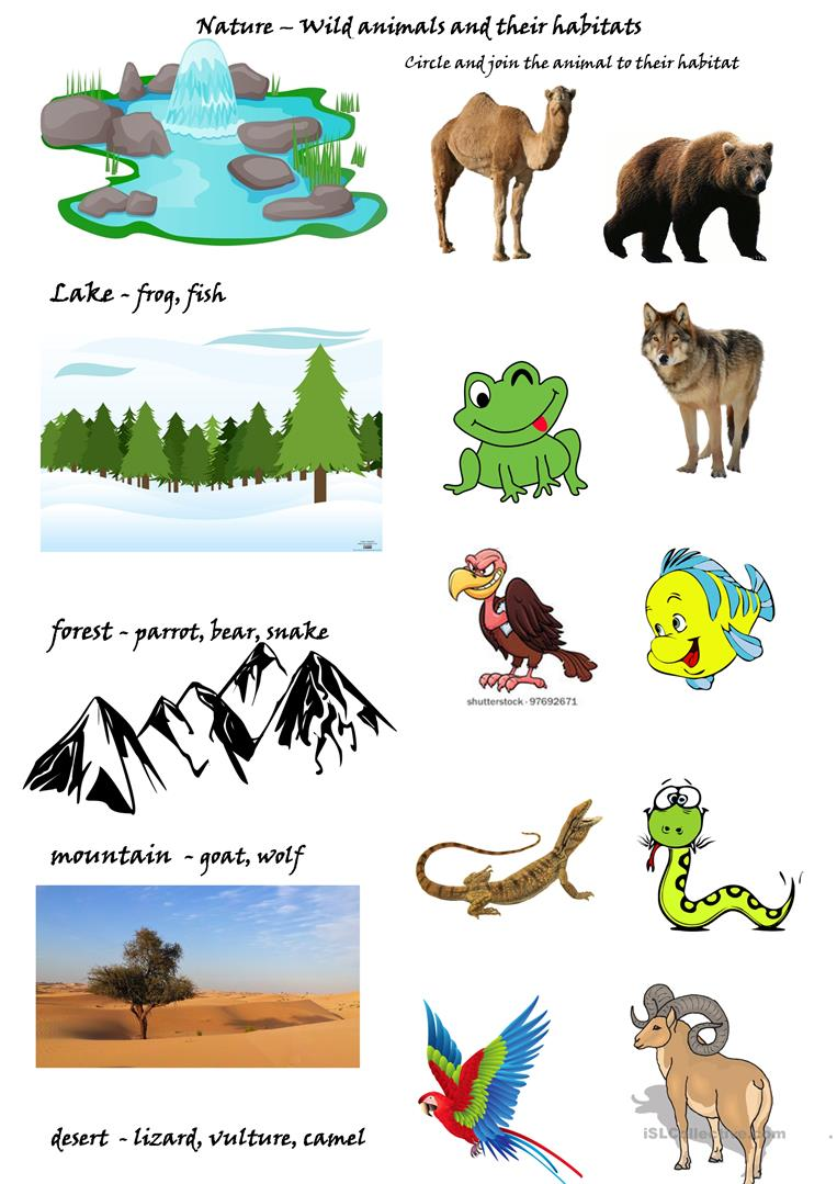 wild animals and their habitats worksheet free esl printable worksheets made by teachers. Black Bedroom Furniture Sets. Home Design Ideas