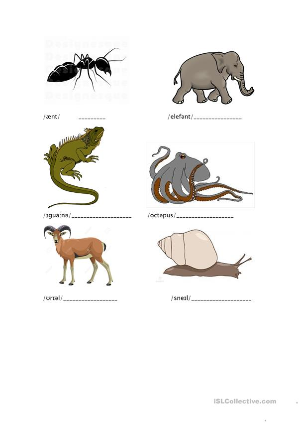 Phonetic Animals