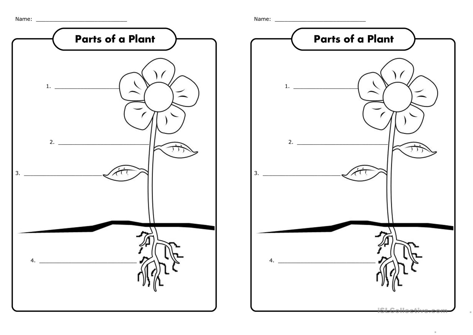Parts of a plant   English ESL Worksheets for distance ...