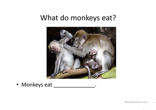 What do animals eat? - English ESL Powerpoints