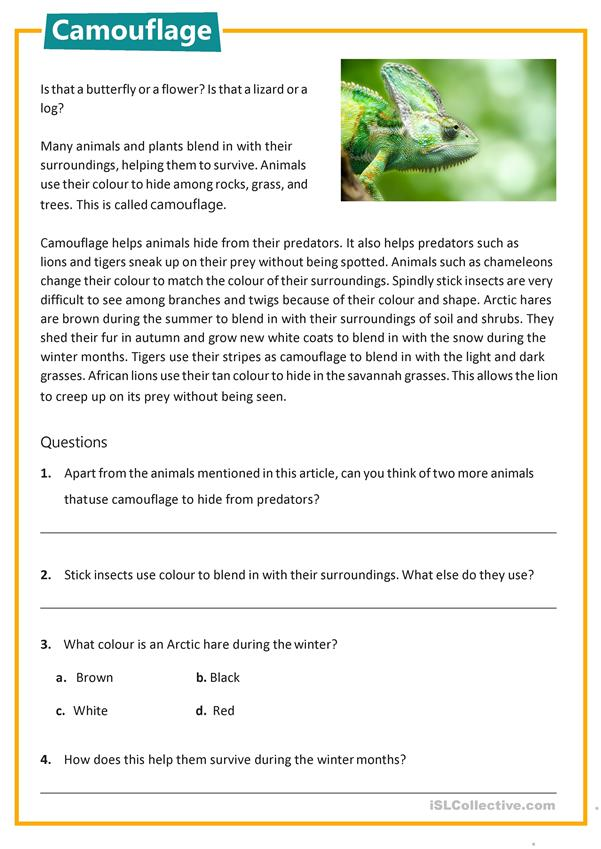 Reading comprehension - Camouflage
