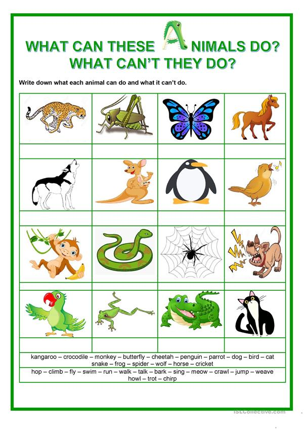 Modals - What can these animals do? What can't they do?